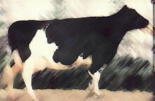 cow.jpg (15811 bytes)